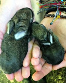 Save the Runt – the Bunny Files