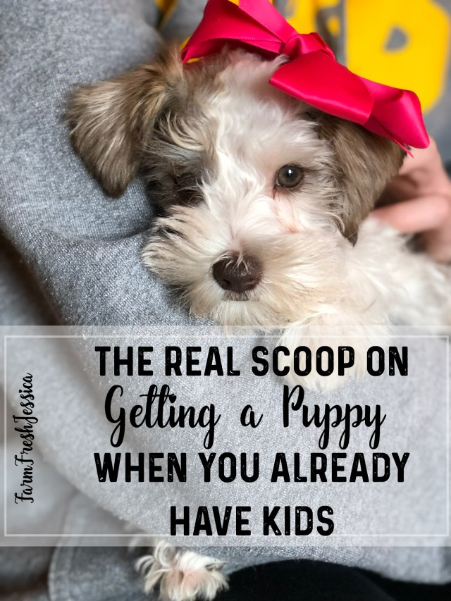 what to expect when you get a puppy families kids new puppy tips for dog care, getting a dog when you already have kids