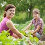 Heirloom-Vegetable-Seeds-Non-GMO-seeds-Non-Hybrid-Easy-to-Grow-0-0
