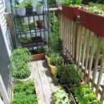 Quictent-Hot-4-tier-Mini-Portable-Green-Hot-Grow-Seeds-House-Indoor-Outdoor-wShelves-Greenhouse-0-1