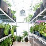 Solexx-Garden-Master-Greenhouse-35MM-Deluxe-8x16x89-0