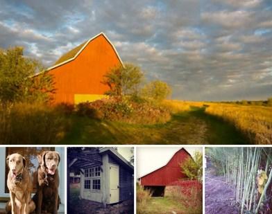 Farmhouse Brown Dog Farm