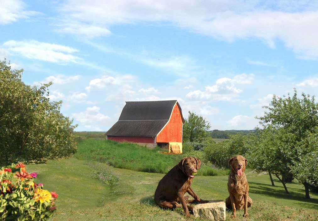 Brown Labs Brown dog farms