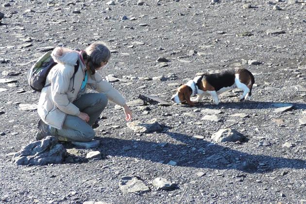 Blue Beach fossil hunt