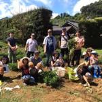 落花生の収穫祭