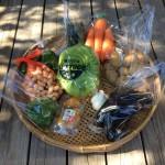 本日の野菜パック