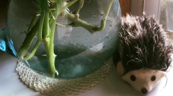 野菜パックに入ったさつまいもの葉がな・なんと
