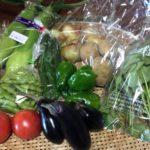 野菜パック発送しました。(2016年7月10日)