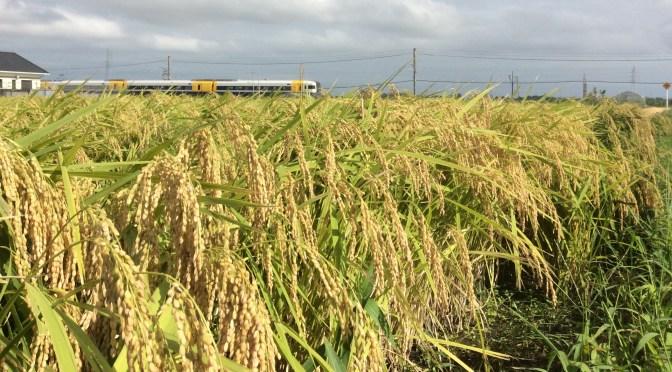 2016年度のお米入荷情報