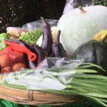 野菜パックを発送しました(2017年9月17日)ーらぶとみ野菜図鑑プレゼントー
