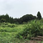 10月28日【ボランティア 募集】放棄地を整備して桜を植えれる場所へ