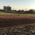 【豆・豆体験】空豆の苗を植えました。