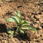 【豆・豆体験】種まきから2カ月