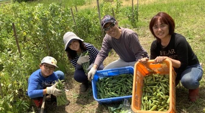 【豆豆体験】豆、豆、豆、いっぱい!
