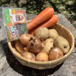 【芋芋体験】じゃがいも収穫して、スープカレー食べよう♪
