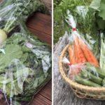 有野実苑野菜パック、旬菜里野菜パックを発送しました(2020年05月10日)