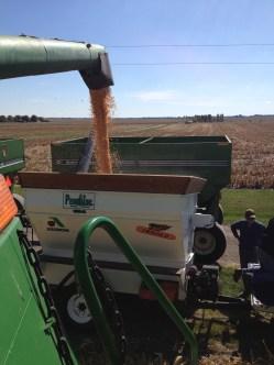 Unloading the combine