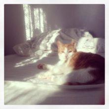Kattens ljus