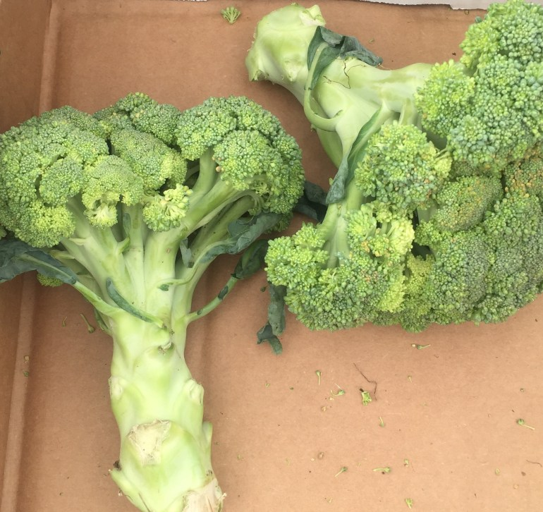 KB broccoli