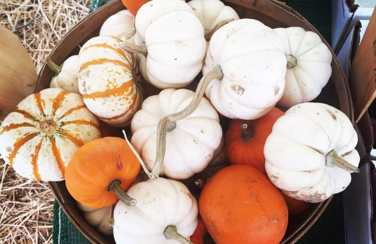 A basket of colorful orange and white gourds minipumpkins