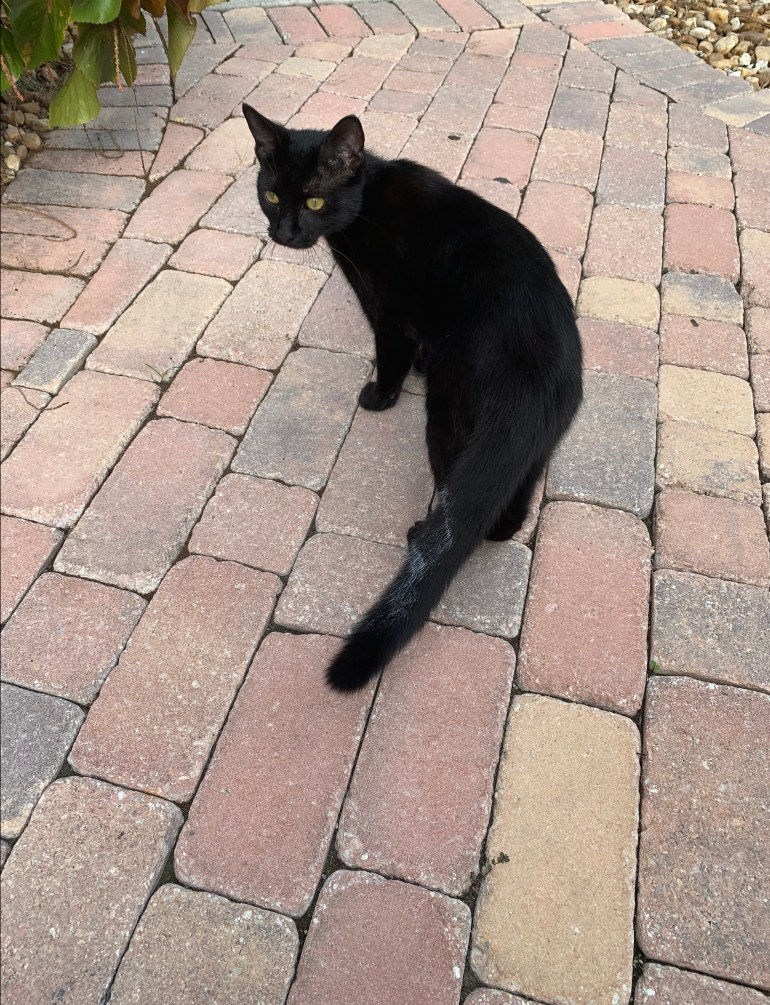 black cat on a brick path