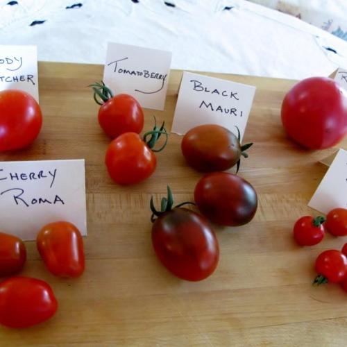 Early heirloom varieties