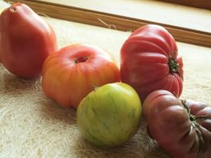 5 different heirloom tomato varieties spread out on a table