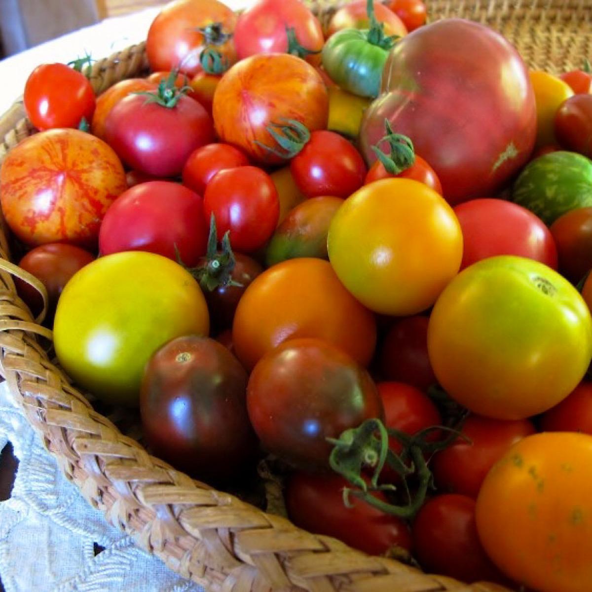 Basket of mixed heirloom tomato varieties