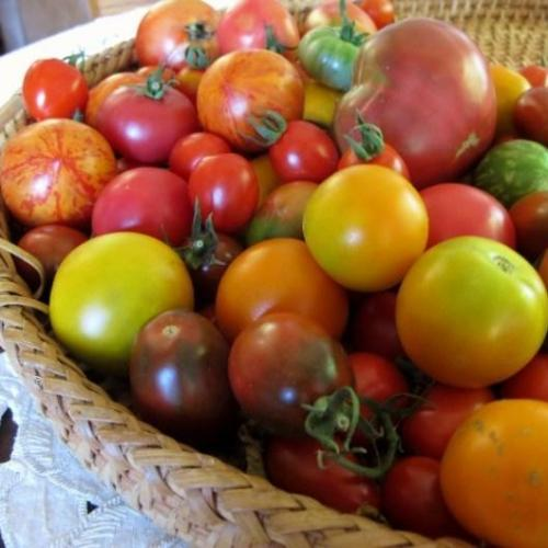 Description of heirloom tomatoes and peppers