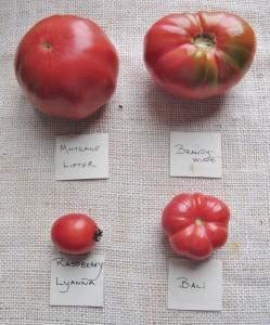 4 varieties of pink heirloom tomatoes with similar flavor profiles