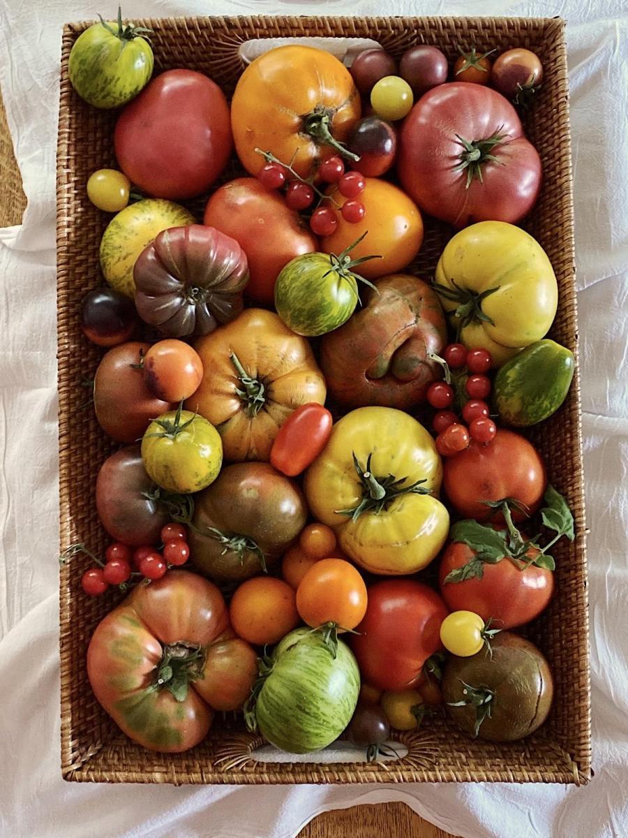 Heirloom tomato varieties displayed on a tray