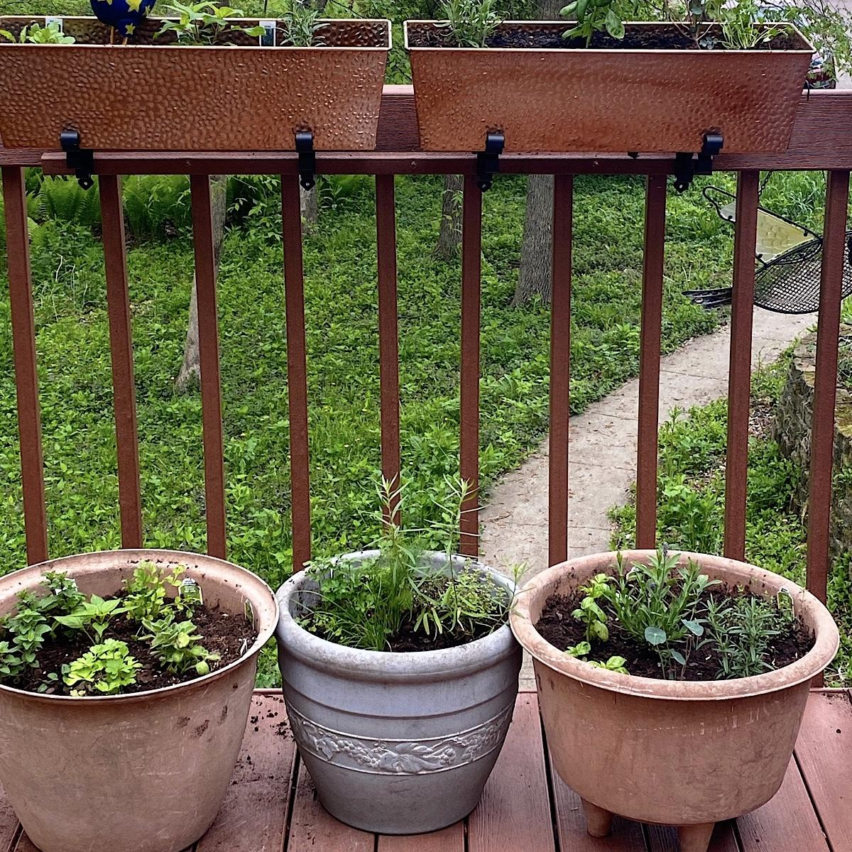 3 herb gardens in pots: Mediterranean, Seafood and Mexican