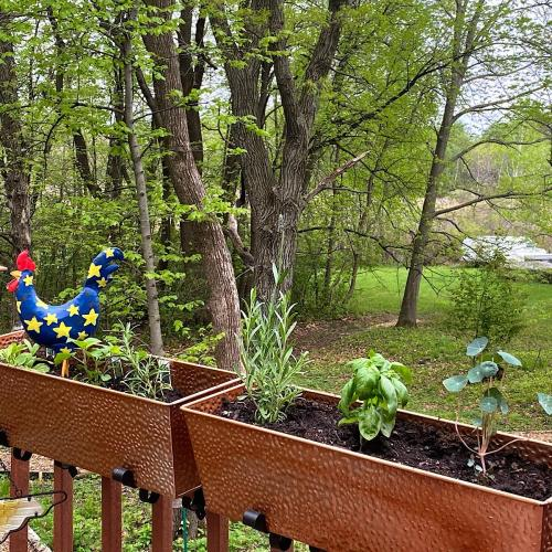 """Combining herbs together in containers on the deck with different """"themes"""""""