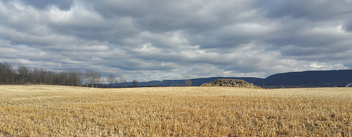 Farmland Leasing & Land Opportunities Program