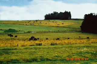 pasture.png