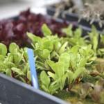 farm-urbana-products
