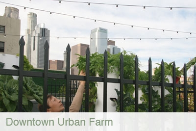 downtown_urban_farm