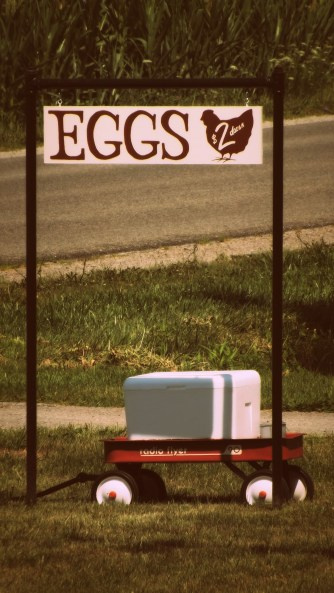 We were finally able to start selling eggs at the end of the drive!