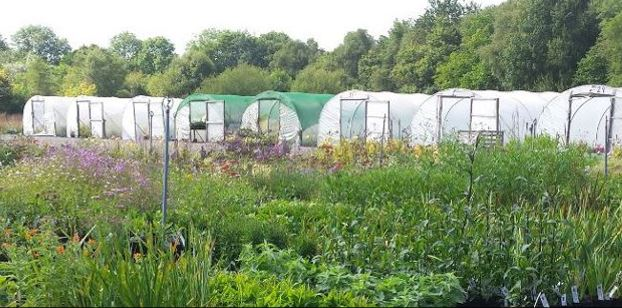 The Nursery Farmyard Nurseries