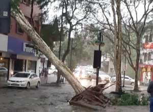 Árvore caída na Rua XV de Novembro em Blumenau - foto de Jan Ricardo Dickmann
