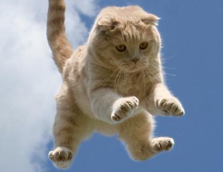 Угадайте, кто будет платить? Кот упал с балкона и повредил авто на 41 тысячу рублей.