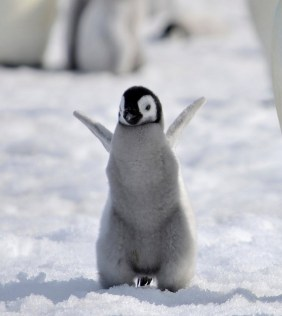 And remember it's World Penguin Day!