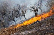 فوت۱جوان دیگر برای خاموش کردن آتش جنگل در ممسنی فارس
