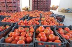 چرا عراق ۲۰۰ کامیون گوجه فرنگی ایران را برگشت داد؟