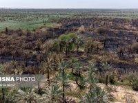 نخلستانهای سوخته، بیش از ۲ هزار و ۲۰۰ نخل مثمر در اروندکنار در آتش سوخت