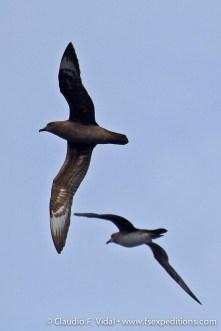 easter-island-pelagics-3