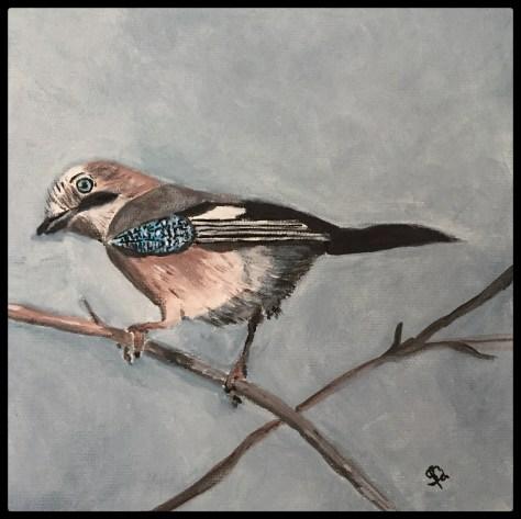 skovskaden, fuglemaleri