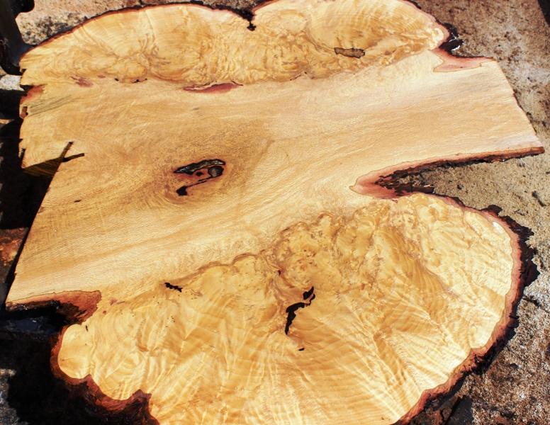 White Oak Burl Prices