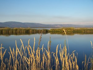 The Island Ranch has approximately 65 acres in hay production, 500 acres in irrigated pasture and approximately 400 acres in water fowl habitat