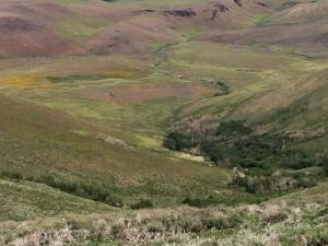 Disaster Peak Cattle Ranch has the potential to grow 1,800 tons of hay.